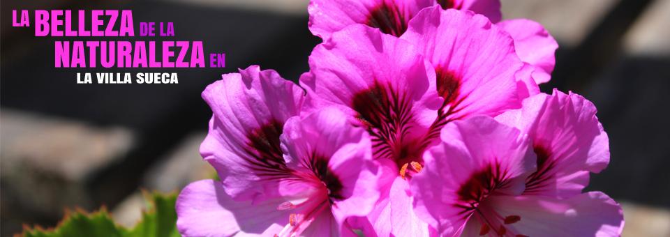 Flor_960x340