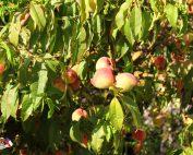 fruta10011