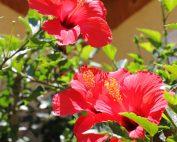 flor-roja-1001