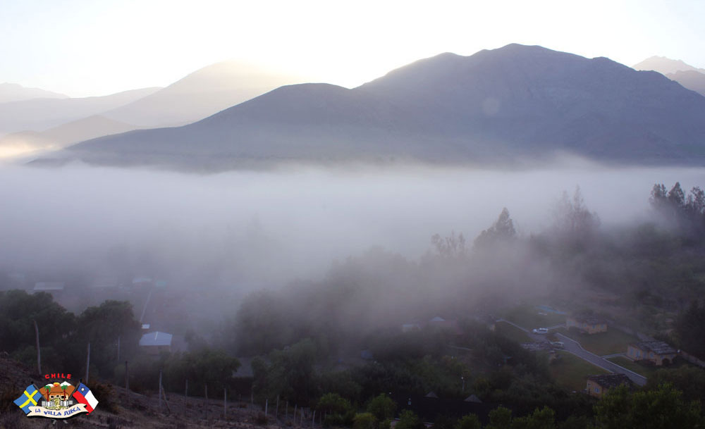 Imágenes de Vicuña en el Valle del Elqui